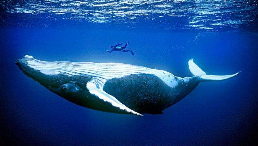 چرا پسدانداران دریایی بزرگند