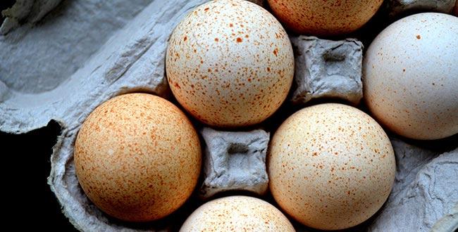 خواص شگفت انگیز تخم مرغ